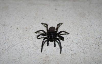 Spider Karma