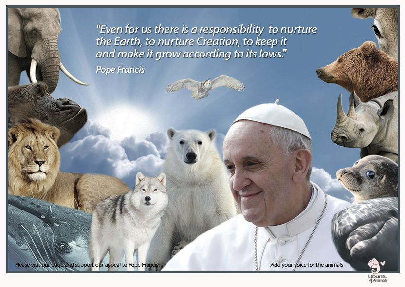 FROM LAUDATO SI